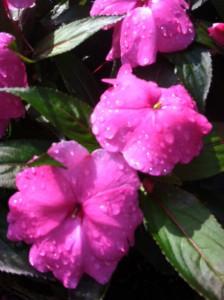 flower rain sun